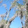 New Orleans - Swamp Boat Ride - 1212127 by DC Photographer