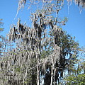 New Orleans - Swamp Boat Ride - 1212128 by DC Photographer