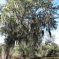 New Orleans - Swamp Boat Ride - 1212129 by DC Photographer