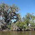 New Orleans - Swamp Boat Ride - 1212132 by DC Photographer