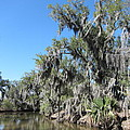 New Orleans - Swamp Boat Ride - 1212135 by DC Photographer