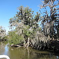 New Orleans - Swamp Boat Ride - 1212141 by DC Photographer