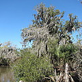 New Orleans - Swamp Boat Ride - 1212144 by DC Photographer