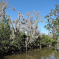 New Orleans - Swamp Boat Ride - 1212146 by DC Photographer