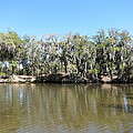 New Orleans - Swamp Boat Ride - 1212150 by DC Photographer