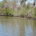 New Orleans - Swamp Boat Ride - 1212157 by DC Photographer
