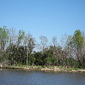 New Orleans - Swamp Boat Ride - 1212161 by DC Photographer