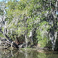 New Orleans - Swamp Boat Ride - 121231 by DC Photographer
