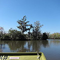 New Orleans - Swamp Boat Ride - 121235 by DC Photographer