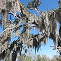 New Orleans - Swamp Boat Ride - 121238 by DC Photographer