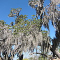 New Orleans - Swamp Boat Ride - 121239 by DC Photographer
