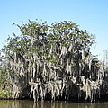 New Orleans - Swamp Boat Ride - 121244 by DC Photographer