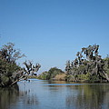 New Orleans - Swamp Boat Ride - 121245 by DC Photographer