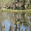 New Orleans - Swamp Boat Ride - 121249 by DC Photographer