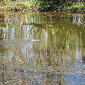 New Orleans - Swamp Boat Ride - 121250 by DC Photographer