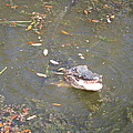 New Orleans - Swamp Boat Ride - 121255 by DC Photographer