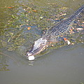 New Orleans - Swamp Boat Ride - 121260 by DC Photographer