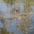 New Orleans - Swamp Boat Ride - 121262 by DC Photographer