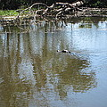 New Orleans - Swamp Boat Ride - 121264 by DC Photographer