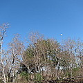 New Orleans - Swamp Boat Ride - 121271 by DC Photographer