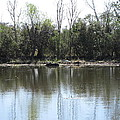 New Orleans - Swamp Boat Ride - 121272 by DC Photographer
