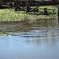 New Orleans - Swamp Boat Ride - 121275 by DC Photographer