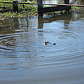 New Orleans - Swamp Boat Ride - 121276 by DC Photographer