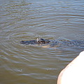 New Orleans - Swamp Boat Ride - 121277 by DC Photographer