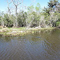 New Orleans - Swamp Boat Ride - 121291 by DC Photographer