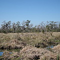 New Orleans - Swamp Boat Ride - 121292 by DC Photographer