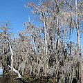 New Orleans - Swamp Boat Ride - 121293 by DC Photographer
