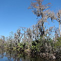 New Orleans - Swamp Boat Ride - 121295 by DC Photographer