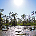 New Orleans Swamp Untouched by Joseph Semary