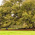 New Orleans' Tree Of Life 2 Paint by Steve Harrington