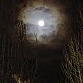 Dark Night Full Moon Through Trees by Toula Mavridou-Messer