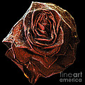 Perfect Gothic Red Rose by Toula Mavridou-Messer