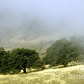 Mist In The Californian Valley by Toula Mavridou-Messer
