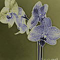 New Photographic Art Print For Sale Orchids 10 by Toula Mavridou-Messer