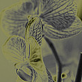 New Photographic Art Print For Sale Orchids 11 by Toula Mavridou-Messer