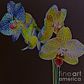 New Photographic Art Print For Sale Orchids 6 by Toula Mavridou-Messer