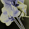 New Photographic Art Print For Sale Orchids 8 by Toula Mavridou-Messer