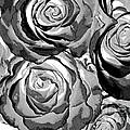 Pop Art  Black And White Roses by Toula Mavridou-Messer