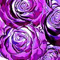 New Photographic Art Print For Sale Pop Art Purple Roses by Toula Mavridou-Messer