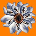 New Photographic Art Print For Sale Pop Art Swan Flower On Orange by Toula Mavridou-Messer