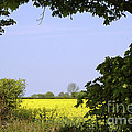 New Photographic Art Print For Sale Yellow English Fields 3 by Toula Mavridou-Messer