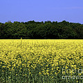 New Photographic Art Print For Sale Yellow English Fields by Toula Mavridou-Messer