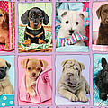 New Puppy Multipic by Greg Cuddiford