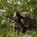 New Voices by Wildlife Fine Art