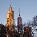 New York City Skyline Through The Trees by Georgia Mizuleva