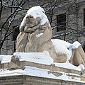 New York Public Library Lion by Frank Romeo